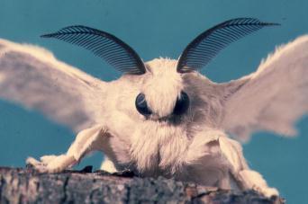 moth.jpeg