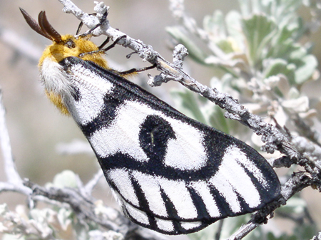 moth2.jpeg